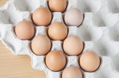 Panel eggs stock images