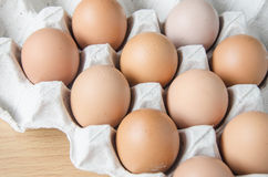 Panel eggs royalty free stock image