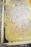 Panel Honey Stock Photo