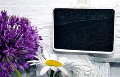 Panel shield purple Allium Royalty Free Stock Photo