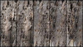 5 paneler av trädskäll Arkivfoto