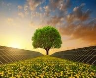 Paneler för sol- energi med trädet mot solnedgånghimmel Arkivbild