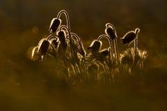 panelljuspulsatillas Royaltyfri Fotografi