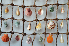 Panels made of shells. Colorful shells hanging tied to the grid isolated on a light background Royalty Free Stock Photos