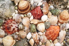 Panels of shells Stock Images