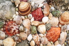 Panels of shells Stock Photography