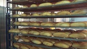 Panes curruscantes frescos del pan en el estante de enfriamiento Fabricación de pan, proceso de fabricación almacen de video