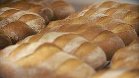 panetteria File delle pagnotte del pane fresco che si trovano sullo scaffale Processo bollente del pane Industria alimentare e pr stock footage