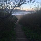 Panettiere Beach Suprise Immagini Stock