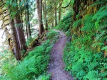 Panettiere River Trail di estate immagini stock libere da diritti