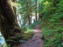Panettiere River Trail di estate immagine stock libera da diritti