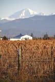 Panettiere vicino del supporto del raccolto del lampone di inverno Fotografie Stock