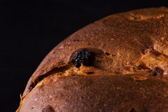 Panettone in close up Royalty Free Stock Images