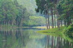 Pang Ung, Beautiful forest lake in the morning Royalty Free Stock Photo
