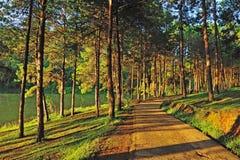 Pang Ung Forestry Plantations imagem de stock