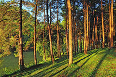 Pang Ung Forestry Plantations Stock Image