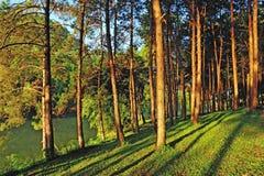 Pang Ung Forestry Plantations Stock Image