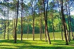 Pang Ung Forestry Plantations Royalty Free Stock Images