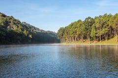 Pang Ung Forestry Plantations no inverno imagem de stock royalty free