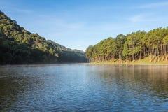 Pang Ung Forestry Plantations no inverno foto de stock