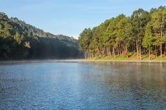 Pang Ung Forestry Plantations no inverno fotografia de stock royalty free