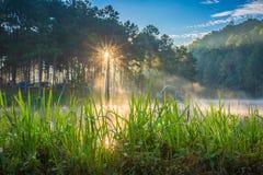 Pang Ung Forestry Plantations, província de Maehongson, Tailândia imagem de stock