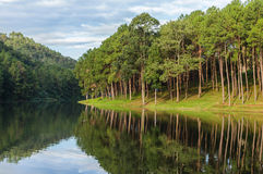 Pang ung lake , pine forest park with reflection of pine in Maehongson,Thailand Stock Images