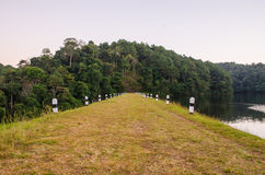 Pang-ung, Pine forest. In Thailand Stock Photos
