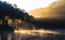 Pang Ung, pino Forest Park del lago Immagini Stock Libere da Diritti