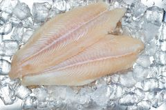 Pangasius basa fish fillet swai river cobbler bocourti fresh on ice. Important for international market stock images
