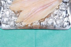Pangasius basa fish fillet swai river cobbler bocourti fresh on ice with metal plate stock images