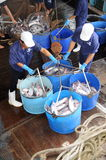 Pangasius catfish is being tranfered from the main boat to the processing plant by buckets Royalty Free Stock Images
