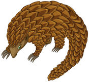 Pangolin Royalty Free Stock Image