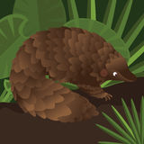 Pangolin between leaf in forest drawing illustration Royalty Free Stock Photography
