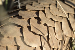 Pangolin scales. Close up of Pangolin scales stock photo