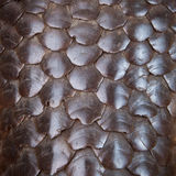 Pangolin skin Stock Photography