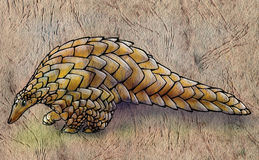 Pangolin tirado mão no papel áspero Fotos de Stock Royalty Free