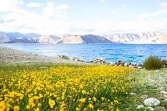 Pangong Lake, Ladakh, India Royalty Free Stock Image