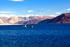 Pangong Lake in Ladakh, Jammu and Kashmir State, India. Stock Images