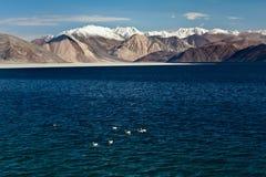 Pangong Tso湖, Ladakh 图库摄影