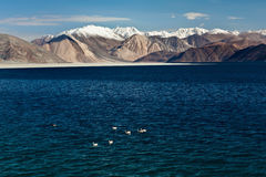 Pangong Tso Lake, Ladakh Stock Photography