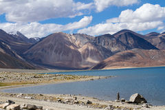 Pangong Tso mountain lake panorama with Buddhist stupas Royalty Free Stock Images