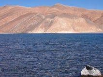 Pangong Tso sjö, en endorheic sjö för hög höjd i Ladakh, tibetan platå Royaltyfria Bilder
