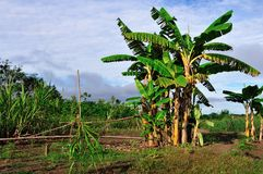Panguana - Peru Royalty-vrije Stock Fotografie