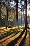 Pangung di campeggio Fotografia Stock Libera da Diritti