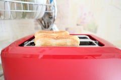Pani tostati tostati per il panino Fotografia Stock Libera da Diritti