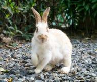 Panic wild rabbit on stone floor Stock Photos