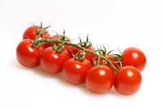 Panicle mit Tomaten lizenzfreie stockfotografie