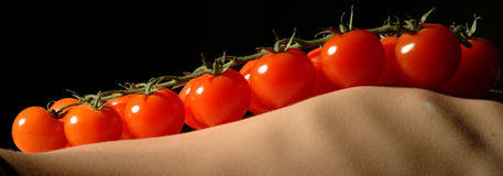 Panicle tomatoes on ribs. Tomatoes on a skinny belly Royalty Free Stock Image