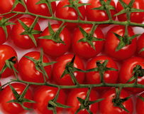 Panicles tomato branches as background Stock Images